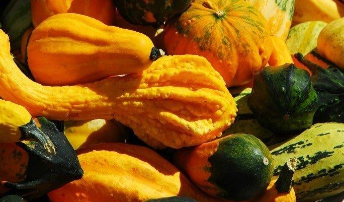 Healthy Nutritional Squash